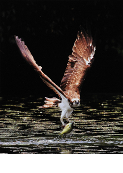 「湖の狩人」  中川 敏和