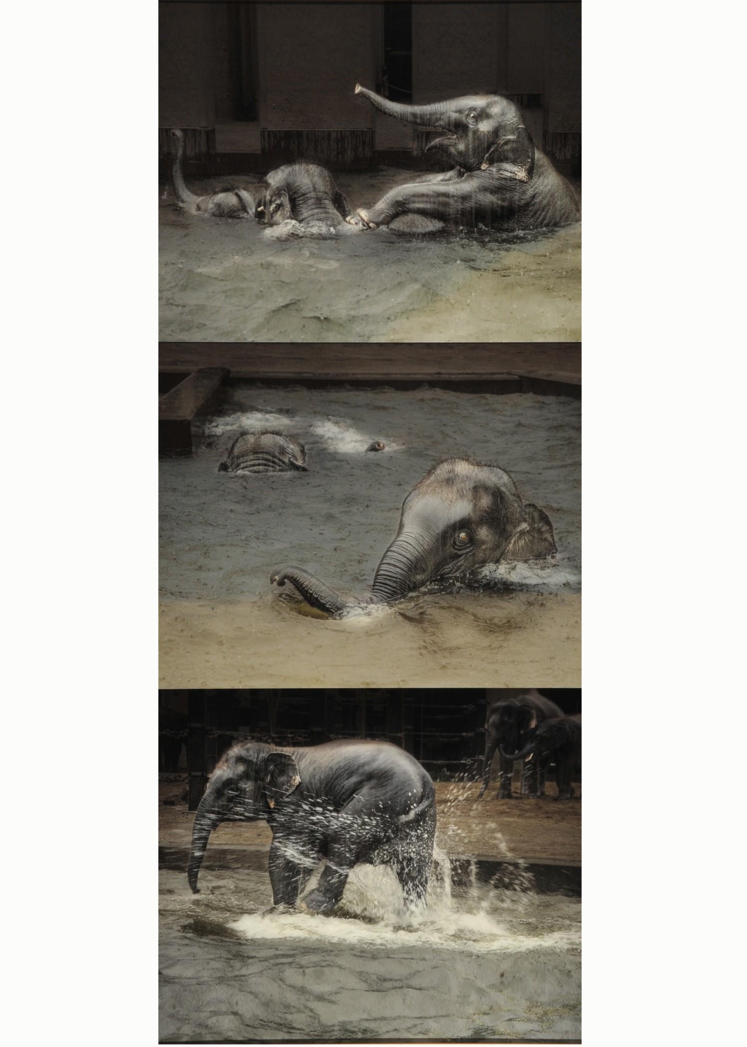 第54回滋賀県写真展覧会特選「恵みの雨」 土肥 美帆