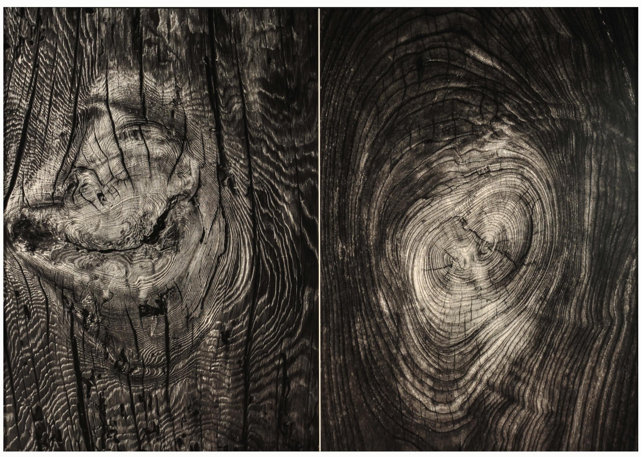 第54回滋賀県写真展覧会特選「サルとコトリ」 前波 誠郎